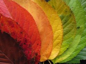 barwy natury